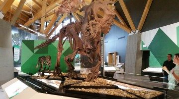 Philip J. Currie dinosaur museum sneak peek (23)